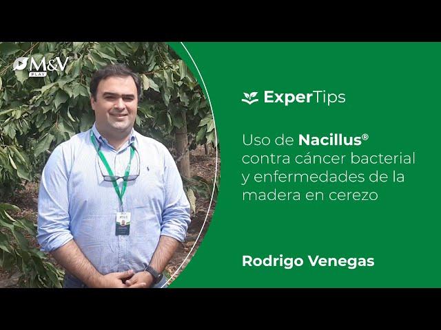 Expertips: Uso de Nacillus contra cáncer bacterial y enfermedades de la madera en cerezo