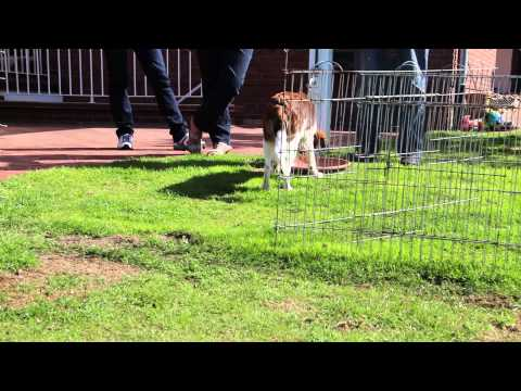 Malu spelen met het konijn (2)