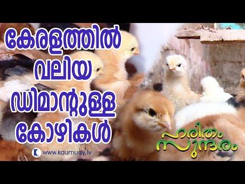 High Demand Poultry Chicken in Kerala | Haritham Sundaram