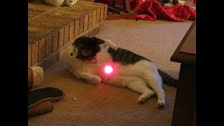 Cats Chasing Laser Pointers Compilation