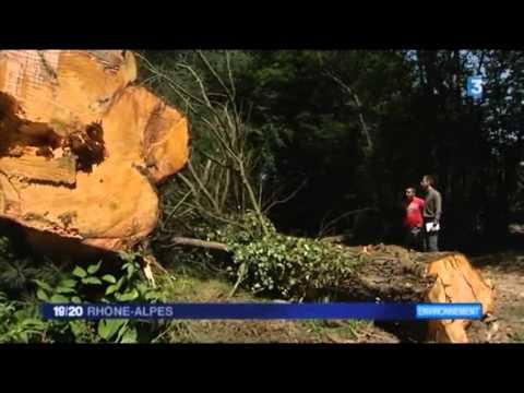 19/20 Rhône Alpes France 3 - Reportage Bois Energie