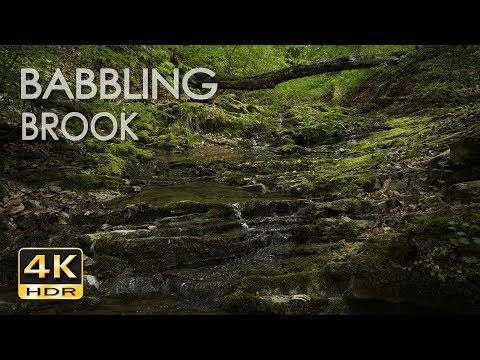 4K HDR Babbling Brook - Trickling Forest Creek - Water Sounds - Relaxing Nature Video