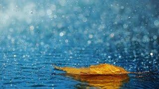【4K】10時間 雨音 高音質 高画質 自然音 安眠 快眠 癒し 寛ぎ 集中 リラックス thumbnail