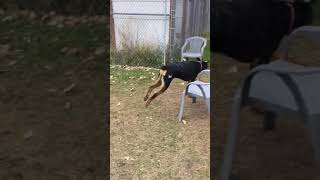 Meet Blaze a Rottweiler currently available for adoption! 10/27/2019 12:12:48 AM