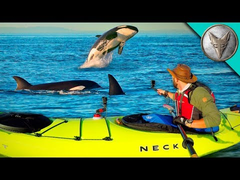 Surrounded by KILLER WHALES!