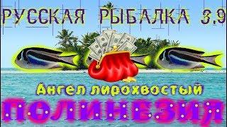 Русская рыбалка 3.9. Ангел лирохвостый. Стоит ли ловить?