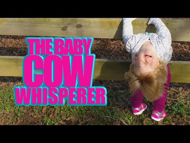 Funny Baby Video - Baby Cow Whisperer