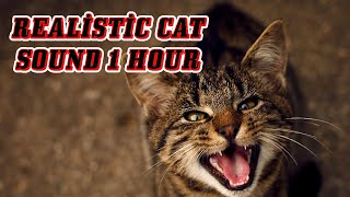 REALİSTİC CAT SOUND 1 HOUR / CAT MEOW SOUND / 1 Hour of Cat Meowing