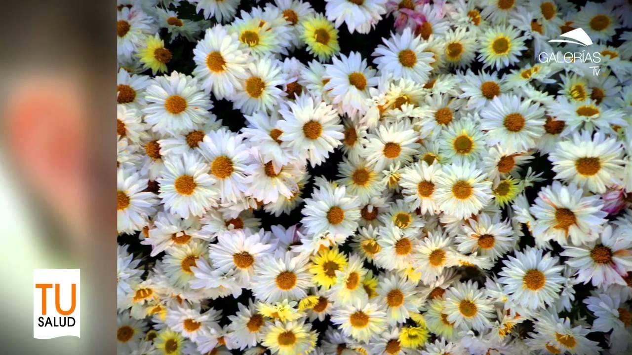 Flores y plantas medicinales youtube for Plantas ornamentales y medicinales