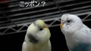 日本を守るタロウさん 最後の方で「ニッポン」と言ってます。