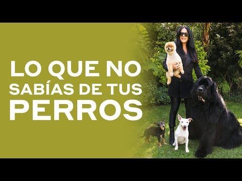 Cómo piensan los perros   Martha Debayle