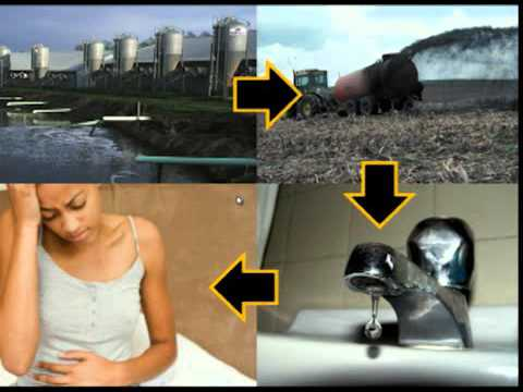 Industrial Food Animal Production Operations: Who is Protecting Affected Communities?