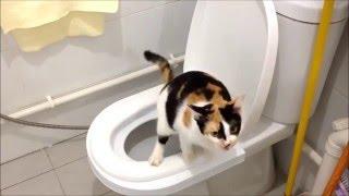 Как приучить кота к унитазу за 12 дней!