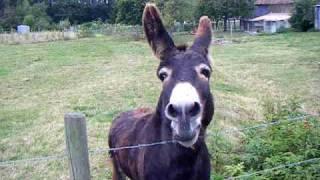 Oscar the Donkey who cries like a baby