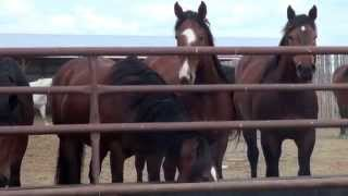 Life on the Stampede Ranch
