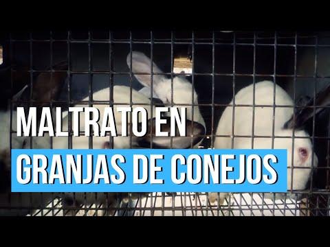 Ninguna ley ampara a los conejos criados en las granjas