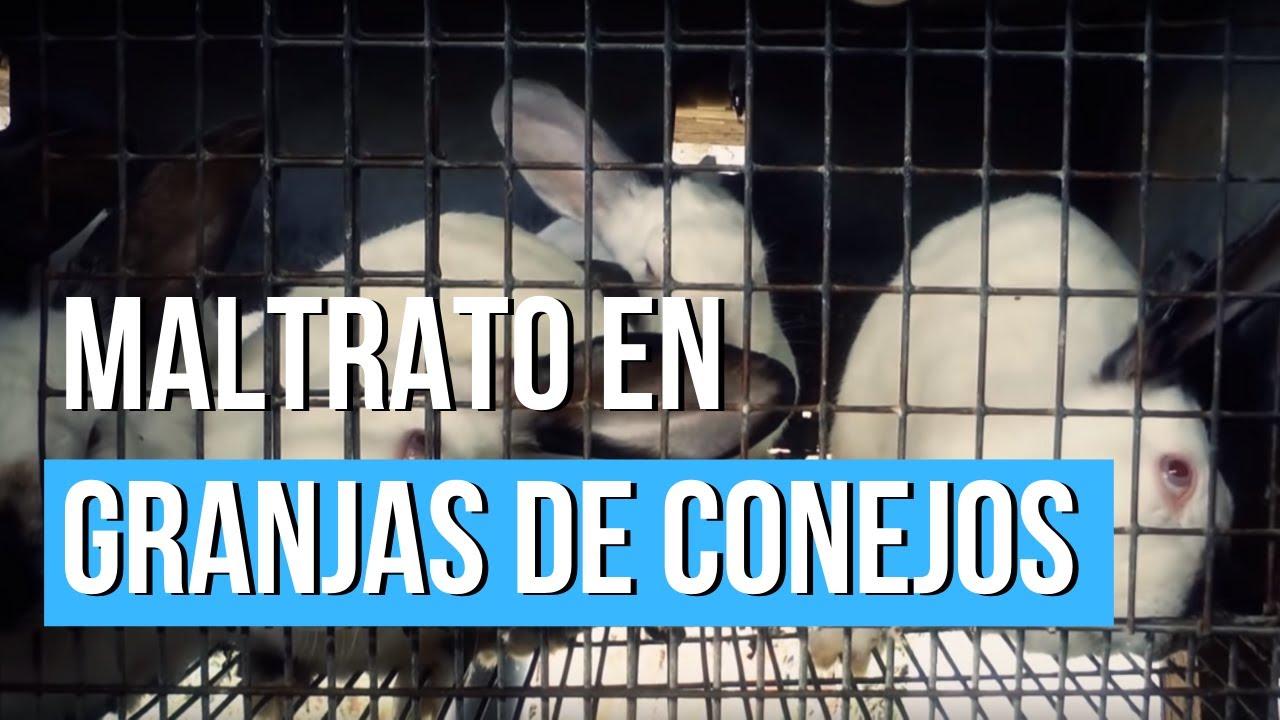 Maltrato En 𝗚𝗥𝗔𝗡𝗝𝗔𝗦 𝗗𝗘 𝗖𝗢𝗡𝗘𝗝𝗢𝗦 Igualdad Animal Youtube
