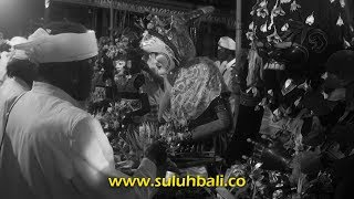 Upacara SakralNebasTapakan Barong Landung Bali