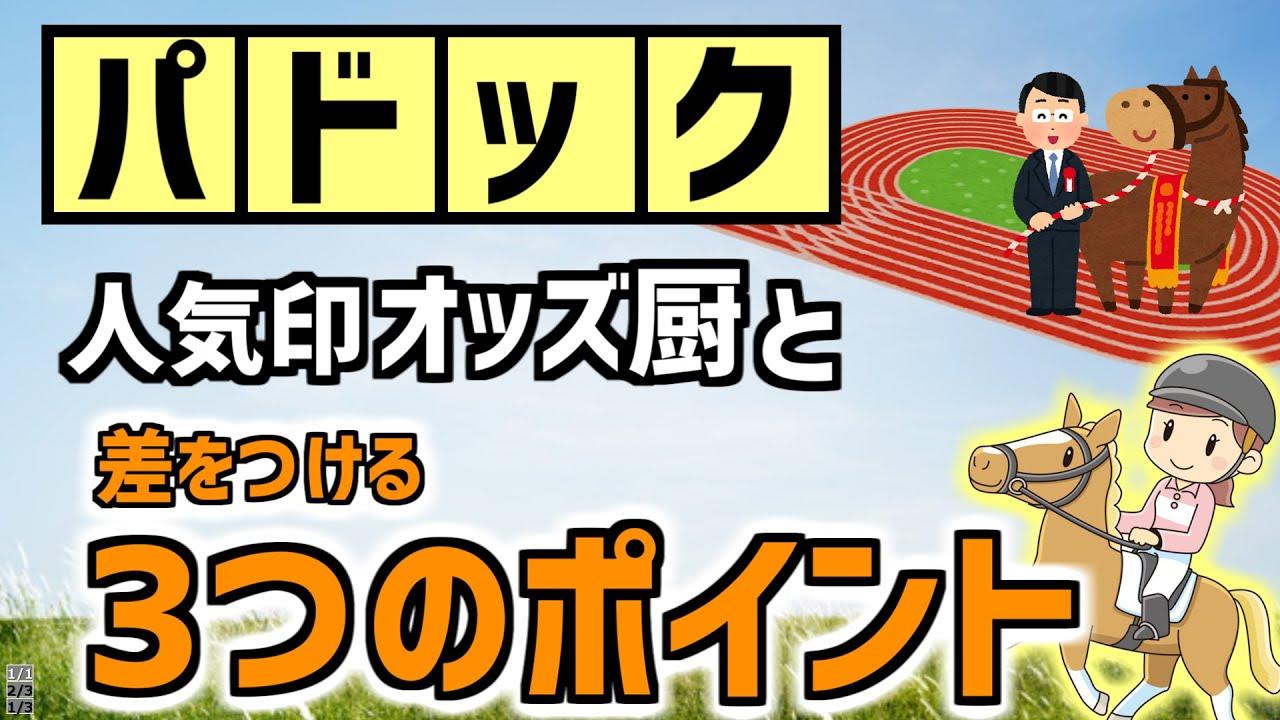 【競馬必勝法】パドックを見るときに確認する3つのポイント