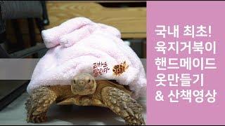 국내 최초 핸드메이드 육지 거북 옷 만들기 리차드의 보…