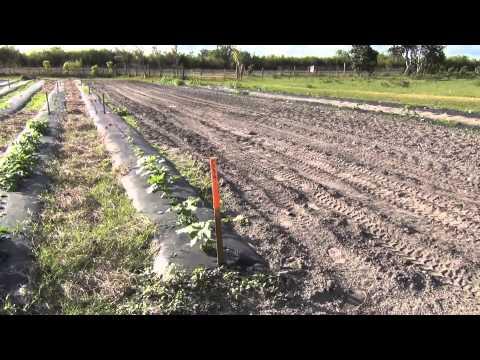 Small vegetable farm experiment