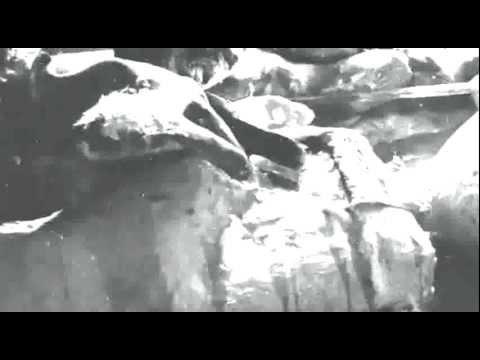 Ігровий автомат Alien Autopsy - грати онлайн безкоштовно і без реєстрації в слот Розтин прибульця.Волгоград