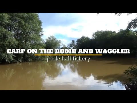 Carp On The Bomb And Waggler - Poole Hall Fishery
