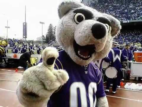 washington mascot harry the husky youtube