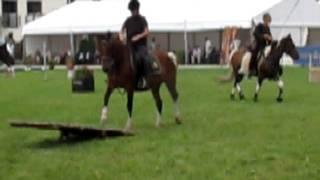 Żurawiejka 3 - na pokazie koni arabskich w Janowie Podlaskim