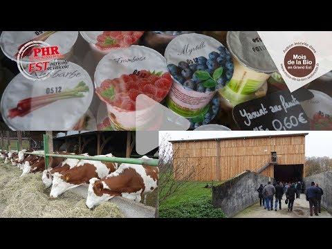 Mois de la bio : Elever des bovins lait en agriculture biologique