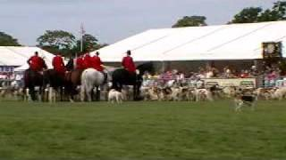 At the Edenbridge and Oxted Show the most welcomed Parade of Foxhou...