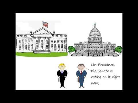 Executive vs Legislative