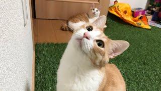 サーカスでも通用する猫を育てようとしたけど断念した生放送