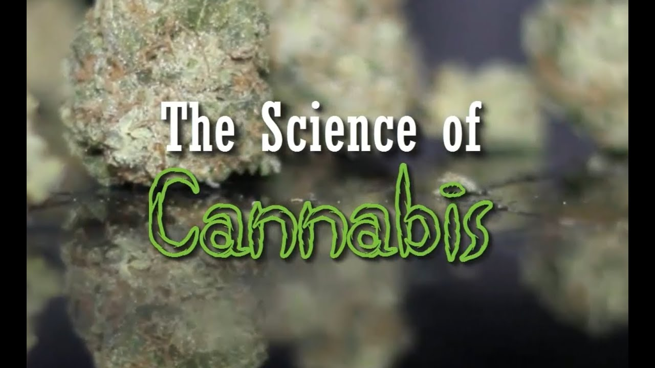 science in the news coursework should cannabis be legalised This pin was discovered by leah marie discover (and save) your own pins on pinterest cannabis science cannabis science.