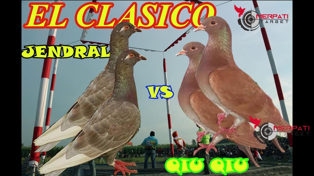 Download 56+ Foto Gambar Burung Merpati Qiu Qiu   Gratis
