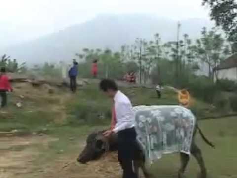 Đám cưới độc nhất thế giới tại Nghệ An Việt Nam.Vui cười và suy nghẫm .FLV