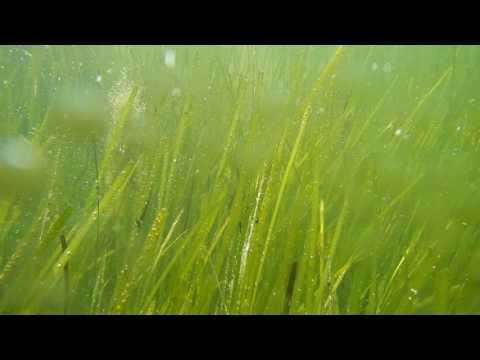 Happy & Healthy Seagrass