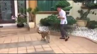 Video Lucu Abang Terlajak Laris Dikejar Kucing Ajaib