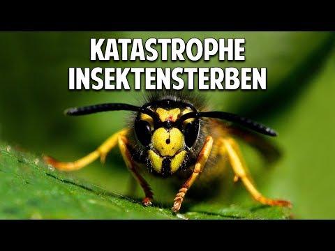 Der stille Tod der Insekten und die katastrophalen Auswirkungen auf die Menschheit