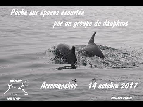 PECHE SUR EPAVES EN NORMANDIE ECOURTEE PAR UN GROUPE DE DAUPHINS   OCTOBRE 2017