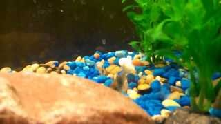 Fresh Water Aquarium, Angelfish, Albino Red Tale Shark, And More. 30 Gallon.