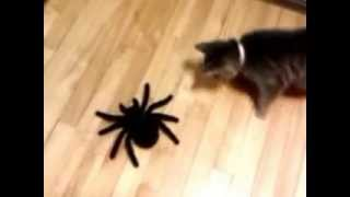 SLAP THAT SPIDER!!!