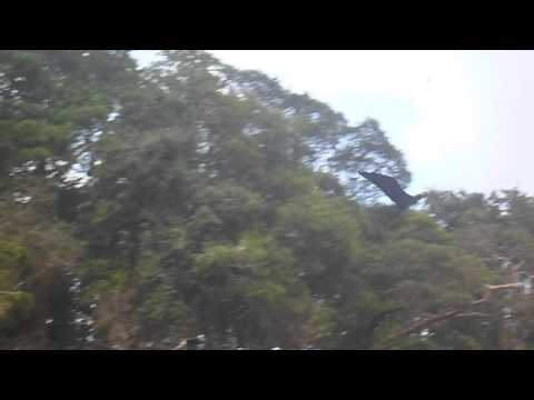 Frigate birds - Jet Ski / Costa Rica
