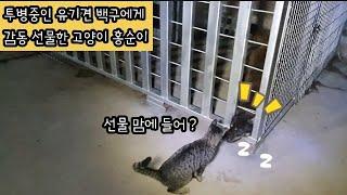 투병중인 유기견 백구에게 감동 선물한 새끼고양이 홍순이