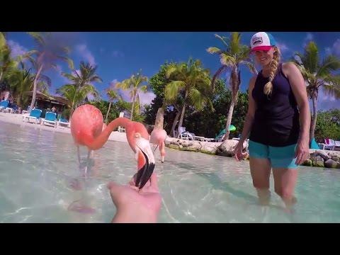 Aruba One Happy Island | Flamingo & Iguana Hand Feeding