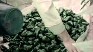 茨城県映画『みんなの県庁』(1968年(昭和43年度)制作)