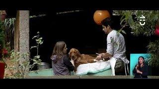 Desalojan a Superchileno que cuida a animales con discapacidad - CHV Noticias