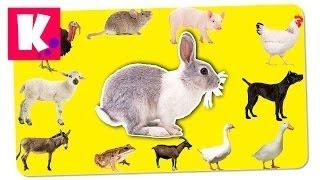 Домашние Животные на Английском. Как говорят животные. Звуки и названия животных для детей