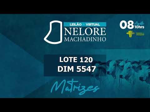 LOTE 120 DIM 5547