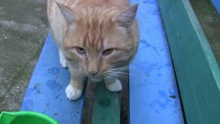 Рыбацкий кот Ёлдаш.Пожиратель бычков. Жуковка.Керчь.